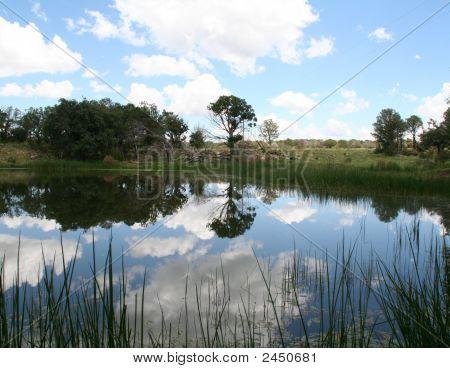 Tree Reflexioninpond