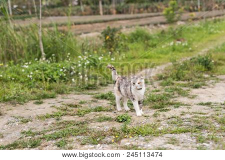 gray cat walk on the grassland