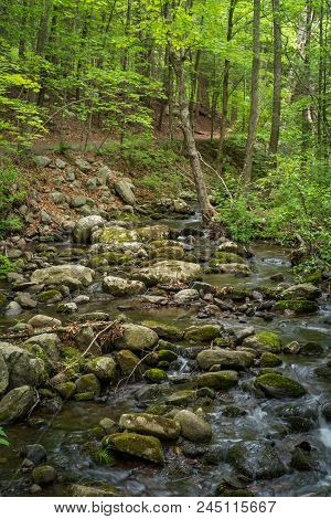 Misty Sunny Stream Deep In The Summer Woods Landscape