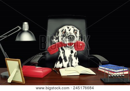 Cute Dalmatian Dog Sitting On Leather Chair With Telephone In His Mouth. Isolated On Black Backgroun