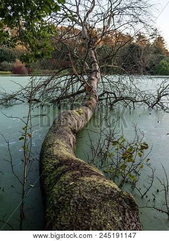 A Fallen Tree Lying Across An Algae Covered Lake.