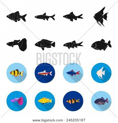 Botia, Clown, Piranha, Cichlid, Hummingbird, Guppy, Fish Set Collection Icons In Black, Flet Style V