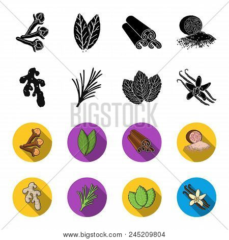 Ginger, Rosemary, Vanilla, Mint.herbs And Spices Set Collection Icons In Black, Flet Style Vector Sy