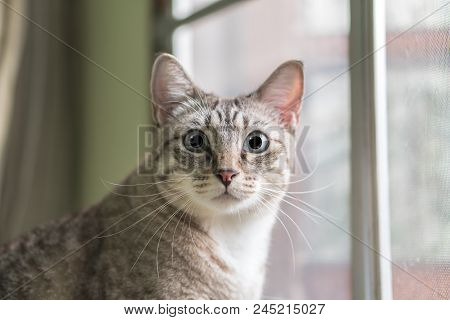 Cute Cat Close Up Portrait On The Window Background