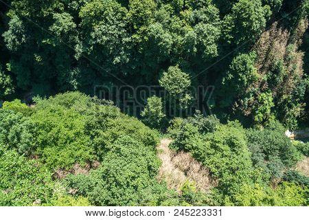 Zeda-gordi, Georgia. Forest Of Okatse Canion.georgia