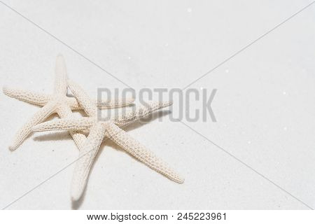 Couple Of Beautiful Starfish On Sandy Beach Background Background For Summer Holiday And Vacation Co