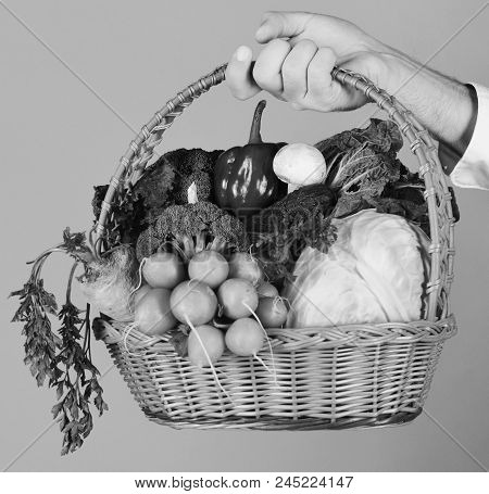 Male Hand Holds Veggies On Red Background. Farmer Holds Cabbage, Radish, Pepper, Broccoli, Carrot, M