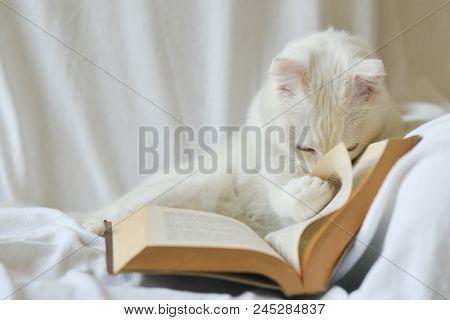 Cute white kitten read a book