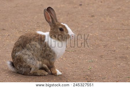 lonely rabbit sitting on yellow sand