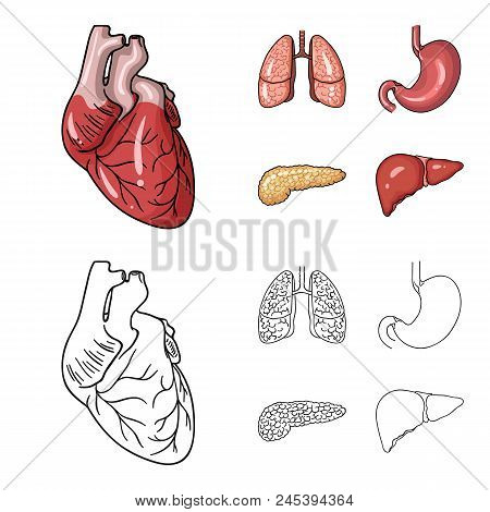Heart, Lungs, Stomach, Pancreas. Human Organs Set Collection Icons In Cartoon, Outline Style Vector