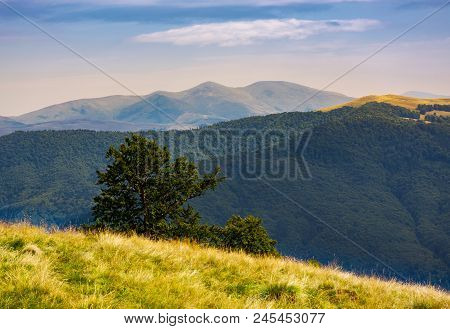 Tree Behind The Grassy Slope In High Mountains. Beautiful Summer Landscape With Svydovets Ridge In T