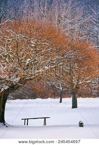 Wooden Bench Under The Trees In Winter Forest. Lovely Nature Scenery