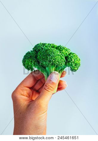 A Fresh Tasty Green Broccoli Cabbage In A Hand. A Bright Colorful Natural Beautiful Delicious Brocco