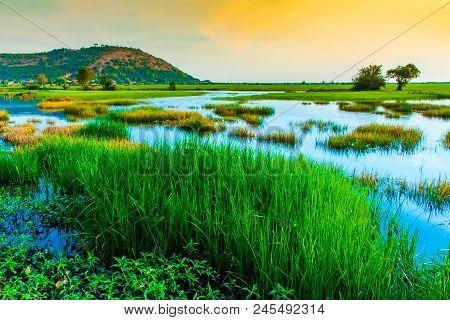 Sunset in rice fields, near Phnom Krom, Sieam Reap in Cambodia poster