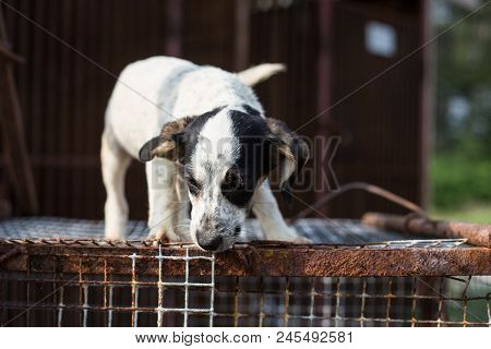 Portrait Of Scared Sad Puppy From A Shelter Standing On The Cage In The Shelter