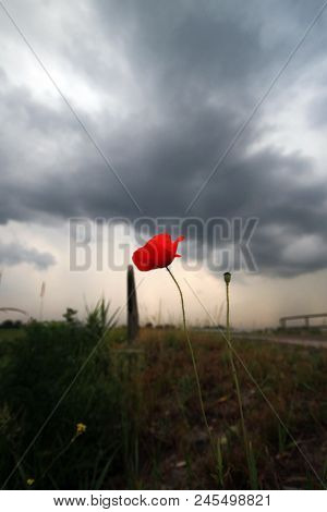 Single Poppy Along Side Of The Road With Big Dark Thuinderclouds On Background In Moordrecht The Net