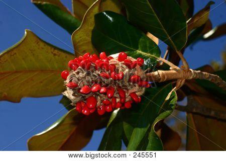 Magnolia Seeds Copy