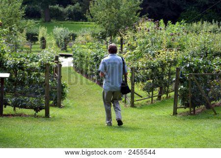 Man Walking In Garden Towards A Pond.