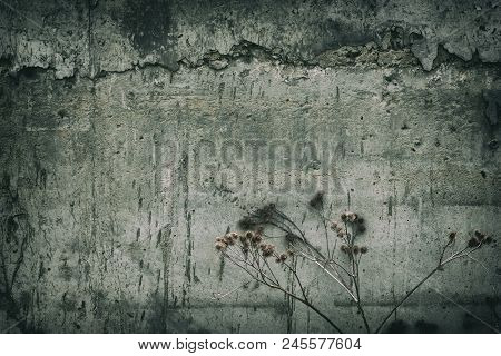 Gloomy Grunge Background. Dead Burdock Near The Concrete Wall. Forgotten And Abandoned