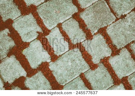 Retro Background Of Concrete Tiles With Red Plants, Diagonal Texture. Carmine Herbs In Paving Slab J