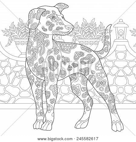 Dalmatian Dog. Coloring Page. Colouring Picture. Adult Coloring Book Idea. Freehand Sketch Drawing.