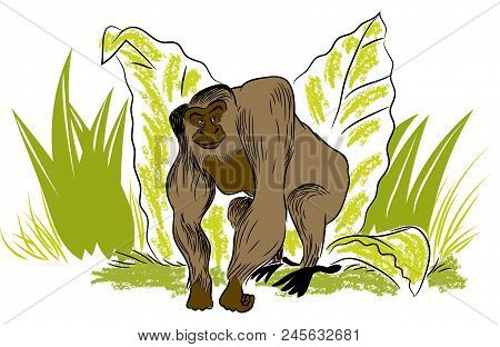 Big Gorilla.  Illustration Of Leafs And Standing Big Gorilla In The Jungle.