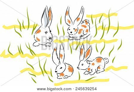 Dappled Bunnies.  Four Bunnies In The Lawns And Herbs.bunnies In The Nature.