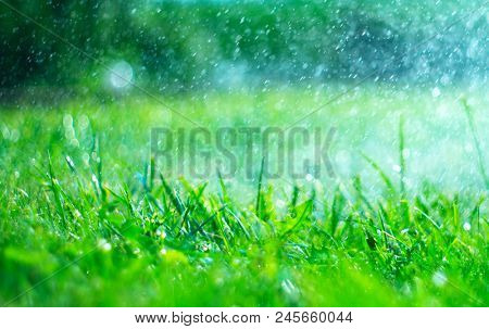 Grass with rain drops. Watering lawn. Rain. Blurred Grass Background With Water Drops closeup. Nature. Environment concept.