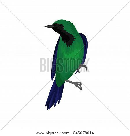 Exotic bird with bright green and dark blue feathers. Wildlife and fauna theme. Graphic element for ornithology book, print or poster. Detailed vector illustration isolated on white background. poster