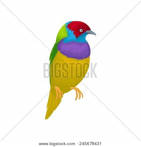 Detailed Portrait Of Gouldian Finch. Exotic Bird With Bright-colored Feathers And Little Beak. Wildl