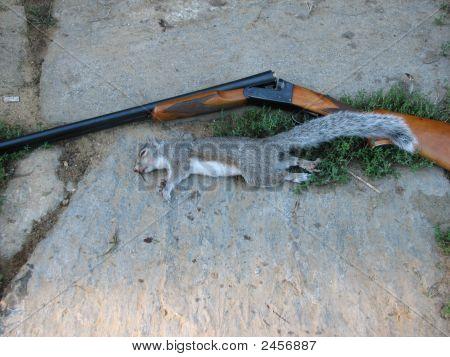Gun And Squirrel