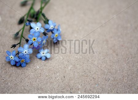 Forget-me-not Blue Romantic Flowers On Paper Beige Natural Background