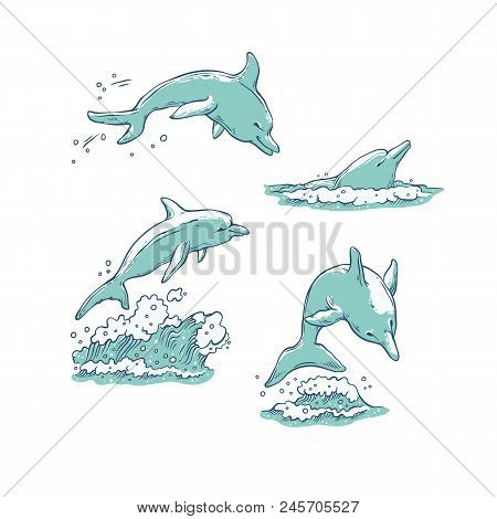 Vector Set Dolphins Jumping Dive And Swim. Monochrome Sketch Sea Animals Isolated On White Backgroun