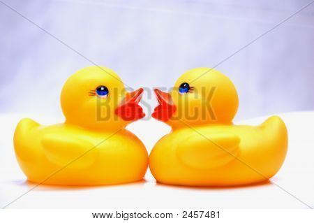 Quackers About You