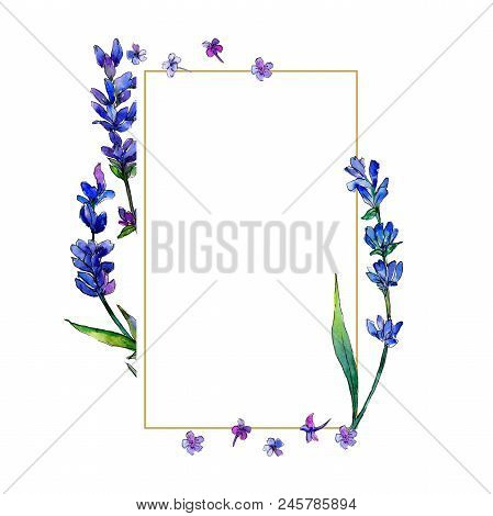Violet Lavender. Floral Botanical Flower. Frame Border Ornament Square. Aquarelle Wildflower For Bac
