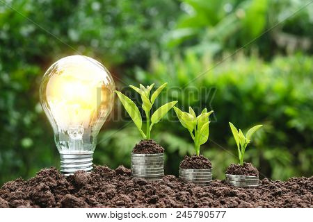 Light Bulb With Coins Beside And Young Plant On Top For Saving Money,financial,business Or Energy Co