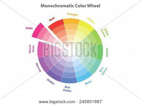 Monochromatic Color Wheel, Color Scheme Theory, Pinks Color In Evidence, Vector Isolated Or White Ba