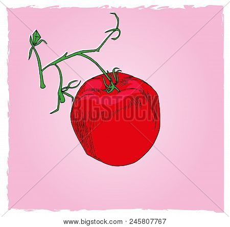 One Tomato In The Cluster.  Illustration Of Food, One Red Tomato In The Green Cluster With Pink Back