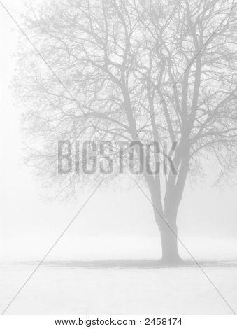 Bare Tree In Winter Fog