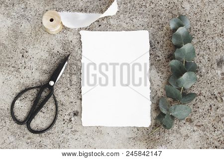Feminine Styled Stock Photo, Greeting Card Mockup. Green Silver Dollar Eucalyptus Branch, Black Vint
