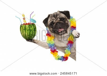 Frolic Summer Pug Dog With Hawaiian Flower Garland, Holding Watermelon Cocktail With Umbrella And St
