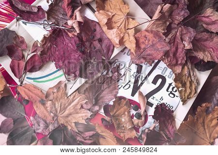 School Mathematical Textbooks, Books, On Table Covered With Red Autumn Leaves. Top View. Concept Of