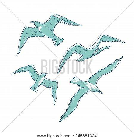 Vector Set Flying Seagulls. Bird Gull Angler Monochrome Outline Sketch Illustration Isolated On Whit
