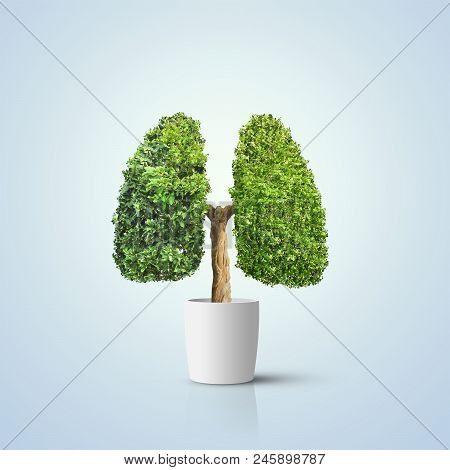 3d Illustration. Green Tree Shaped In Human Lungs. Conceptual Image