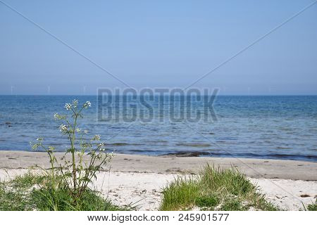 Beautiful Summer Beach With A Windmill Farm In The Horizon At The Swedish Island Oland In The Baltic