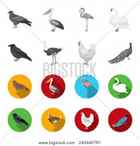 Crow, Ostrich, Chicken, Peacock. Birds Set Collection Icons In Monochrome, Flat Style Vector Symbol