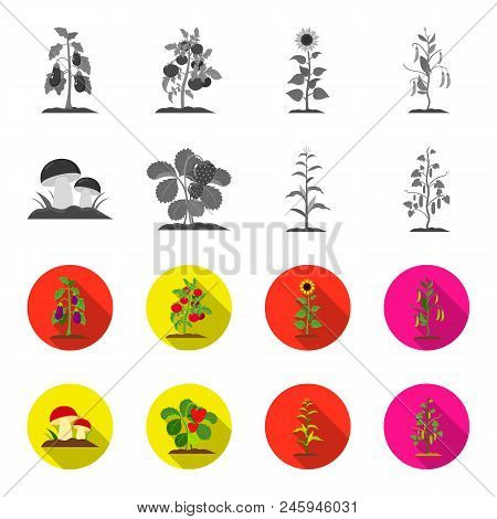 Mushrooms, Strawberries, Corn, Cucumber.plant Set Collection Icons In Monochrome, Flat Style Vector