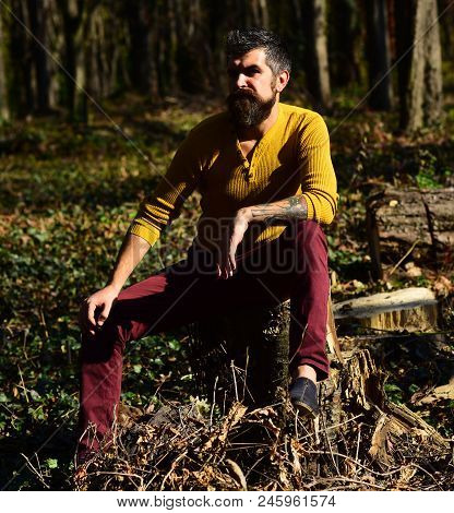 Macho Spends Time In Park. Guy With Beard Sits On Tree Stump In Forest. Man With Serious Face On Out