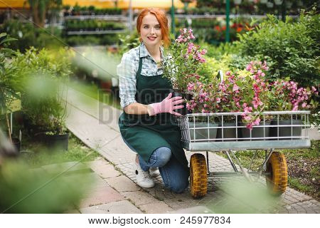 Pretty Smiling Florist In Apron And Pink Gloves Happily Looking In Camera While Working With Flowers