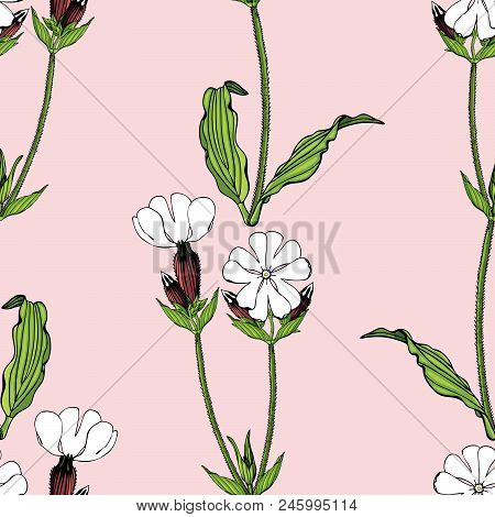 Seamless Pattern With White Campion Flowers On Pink Background Stock Vector Illustration.